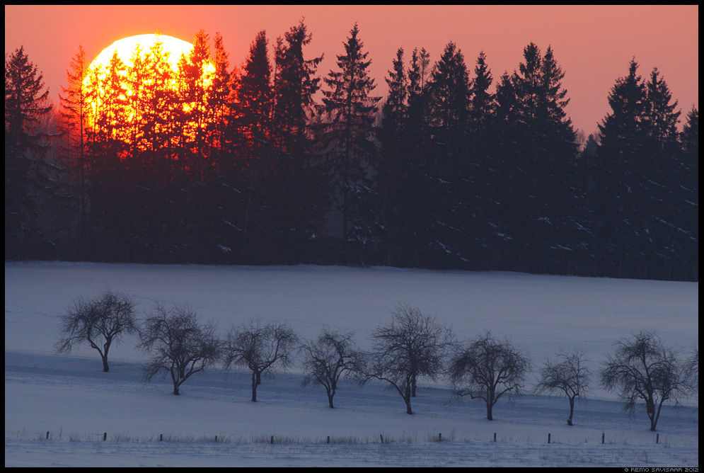 õunapuu, õunapuud, allee, apple tree alley, trees, sunset, päikeseloojang, talv, winter, cold