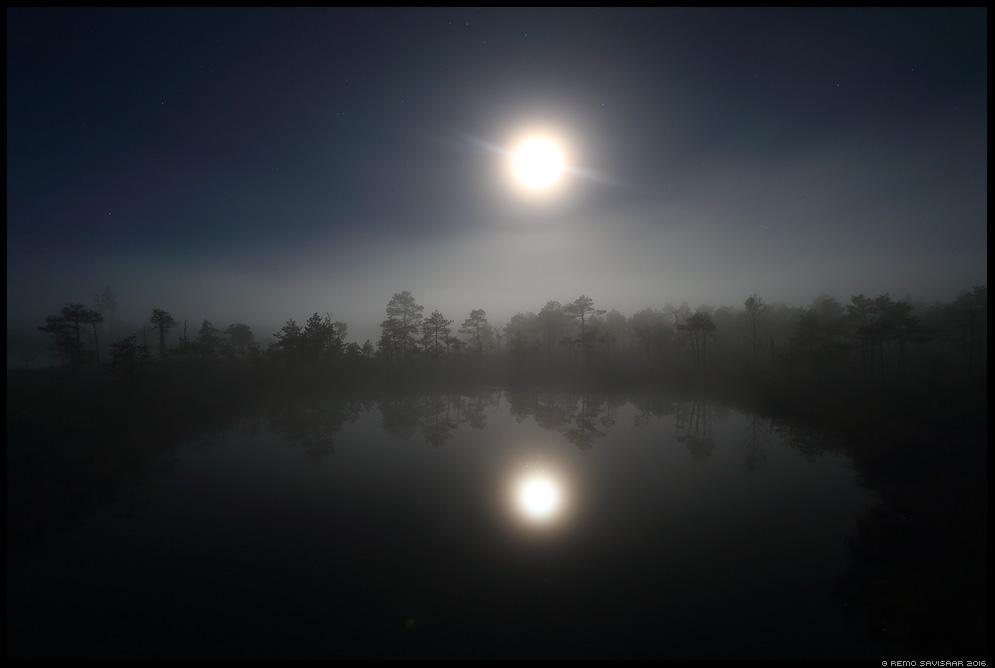 Öö rabas, Night in the bog The Night raba öö midnight bog swamp mist misty fog foggy moon Remo Savisaar Eesti loodus  Estonian Estonia Baltic nature wildlife photography photo blog loodusfotod loodusfoto looduspilt looduspildid
