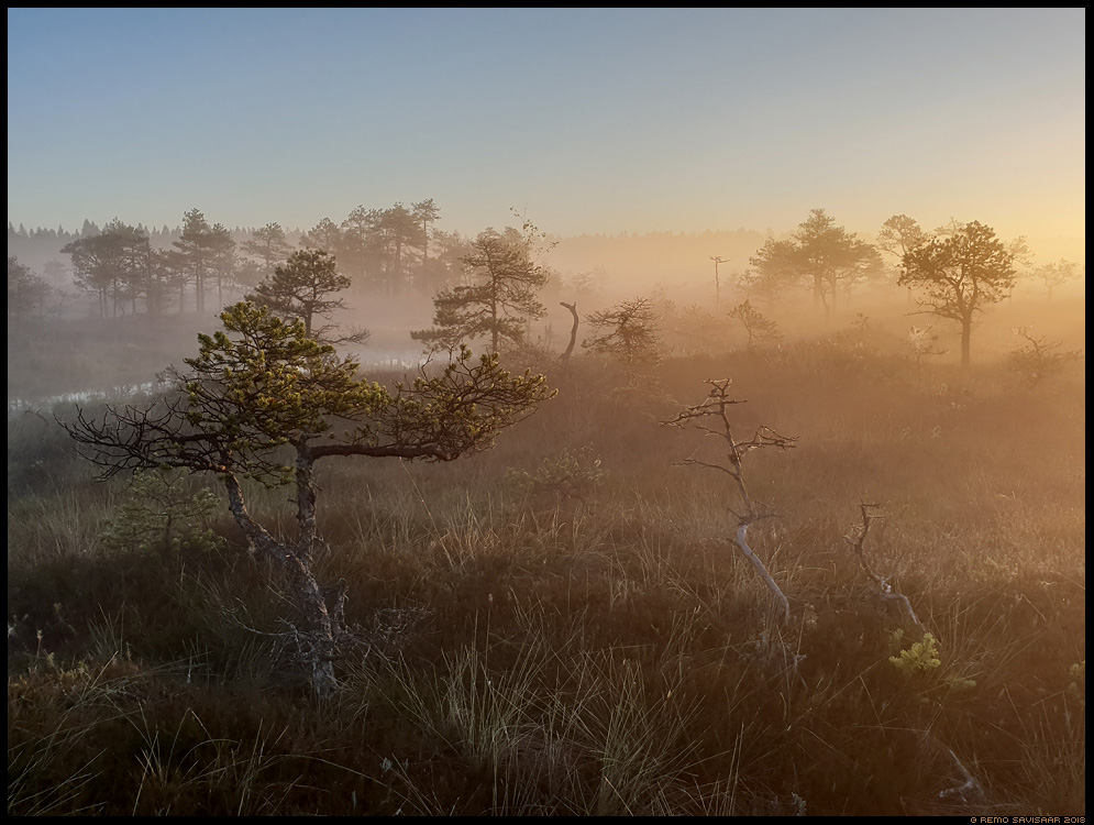 raba bog samsung galaxy s9+ nutitelefon smartphone Remo Savisaar Eesti loodus Estonian Estonia Baltic nature wildlife photography photo blog loodusfotod loodusfoto looduspilt looduspildid landscape nature wild wildlife nordic