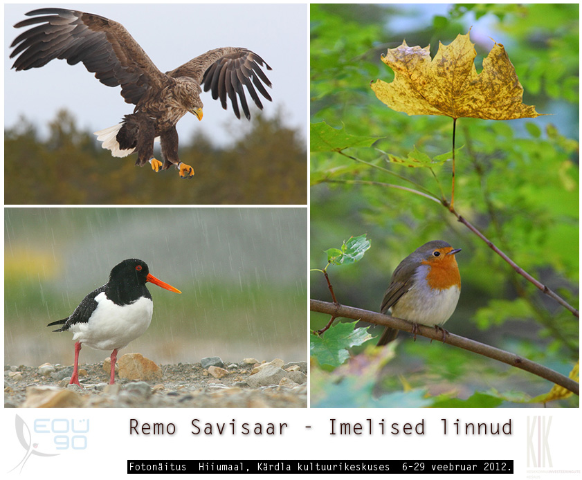 imelised linnud, fotonäitus, kärdla kultuurikeskus, hiiumaa, Eesti ornitoloogiaühingu 90. juubel