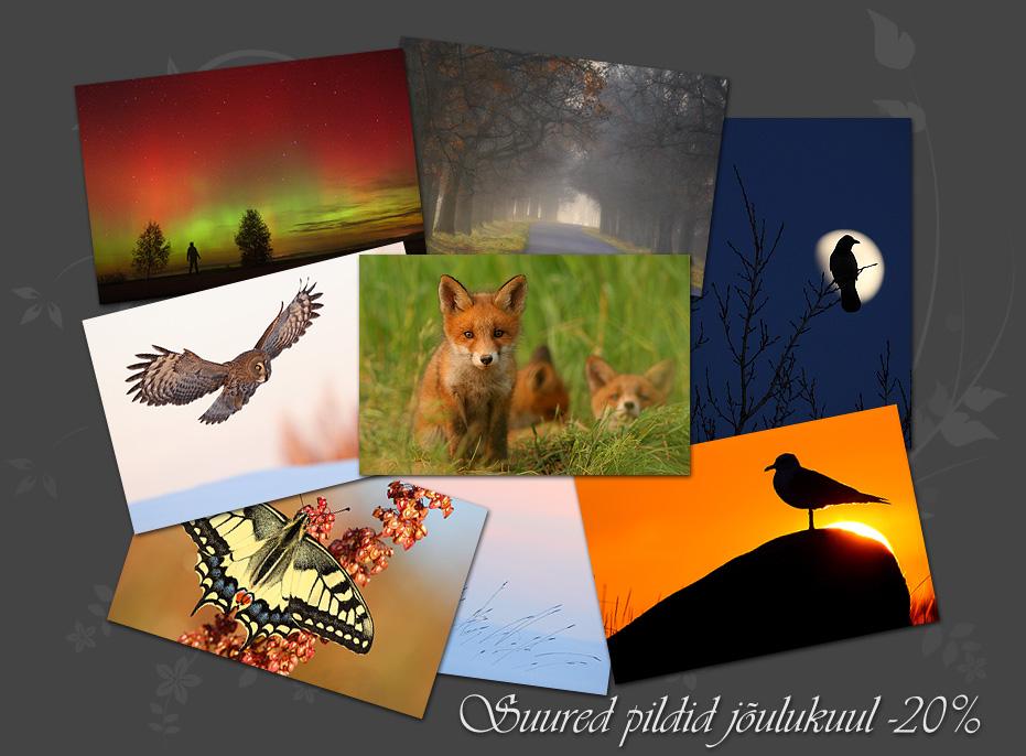 Eesti loodus, loodusfotod, looduspildid, pildimüük