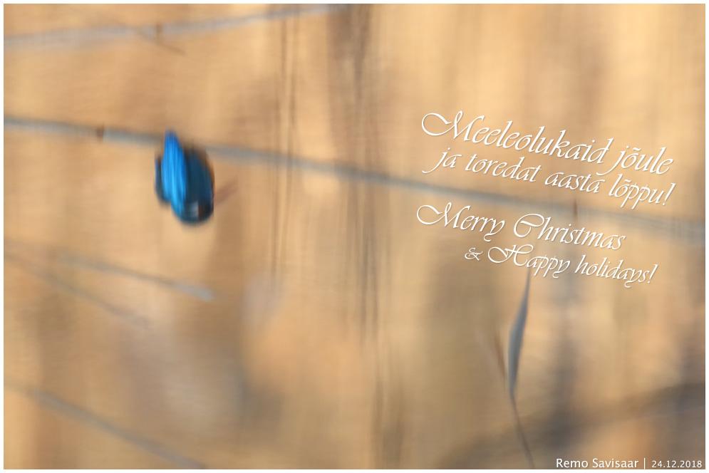 Pühadetervitused! Season's Greetings! jõulud xmas Remo Savisaar Eesti loodus  Estonian Estonia Baltic nature wildlife photography photo blog loodusfotod loodusfoto looduspilt looduspildid