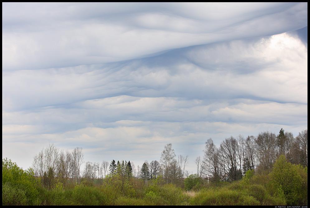 Maalitud pilved Painted clouds Undulatus asperatus Remo Savisaar Eesti loodus  Estonian Estonia Baltic nature wildlife photography photo blog loodusfotod loodusfoto looduspilt looduspildid