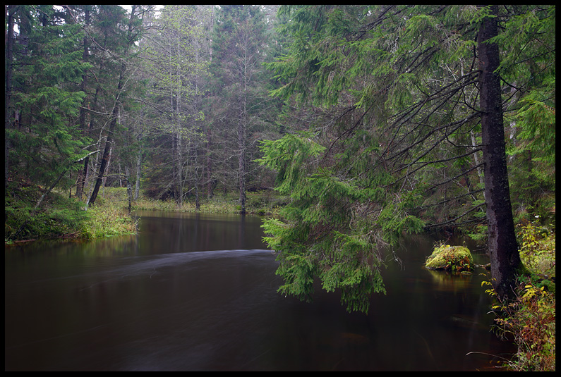 Vaikuse hetk, Moment of silence, ahja jõgi, vesi, ahja river, mets, forest