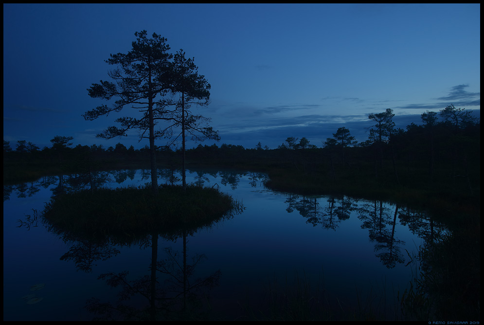 Sinine tund rabas, Blue hour in the bog laugas pool hämar pime hämarik dusk eha alam-pedja nature reserve alam-pedja looduskaitseala Remo Savisaar Eesti loodus  Estonian Estonia Baltic nature wildlife photography photo blog loodusfotod loodusfoto looduspilt looduspildid