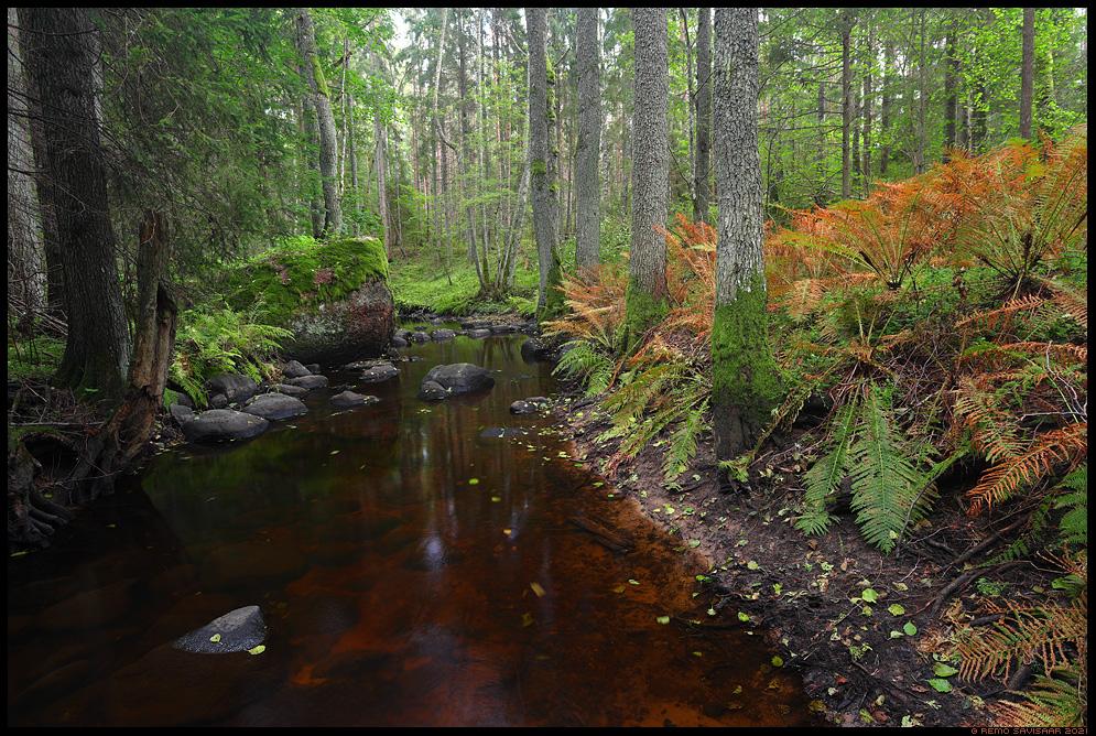 Väike metsajõgi, Small forest river Lahemaa rahvuspark, Lahemaa National Park, Estonia. Remo Savisaar Eesti loodus  Estonian Estonia Baltic nature wildlife photography photo blog loodusfotod loodusfoto looduspilt looduspildid