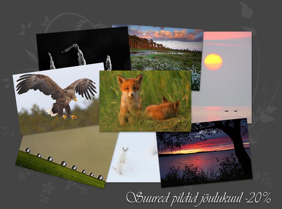 Eesti loodus, loodusfotod, pildimüük