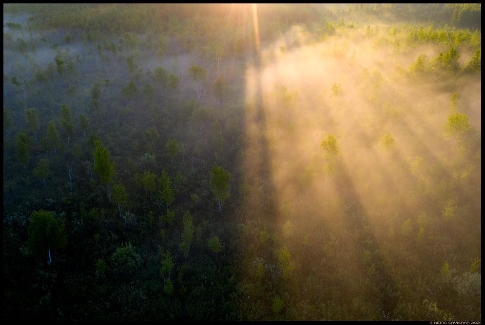 emajõe-suursoo Remo Savisaar Eesti loodus Estonian Estonia Baltic nature wildlife photography photo blog loodusfotod loodusfoto looduspilt looduspildid landscape nature wild wildlife nordic