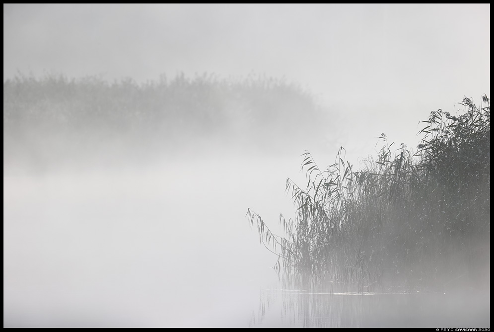 Salapärane Emajõgi, Mysterious river Emajõgi udu udune mist misty pilliroog reeds Remo Savisaar Eesti loodus  Estonian Estonia Baltic nature wildlife photography photo blog loodusfotod loodusfoto looduspilt looduspildid