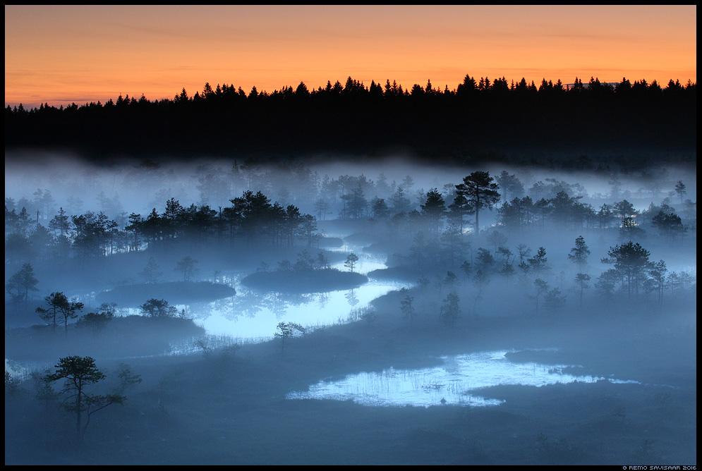Suveöö, Midsummer night raba öö midnight bog swamp mist misty fog foggy moon Remo Savisaar Eesti loodus  Estonian Estonia Baltic nature wildlife photography photo blog loodusfotod loodusfoto looduspilt looduspildid
