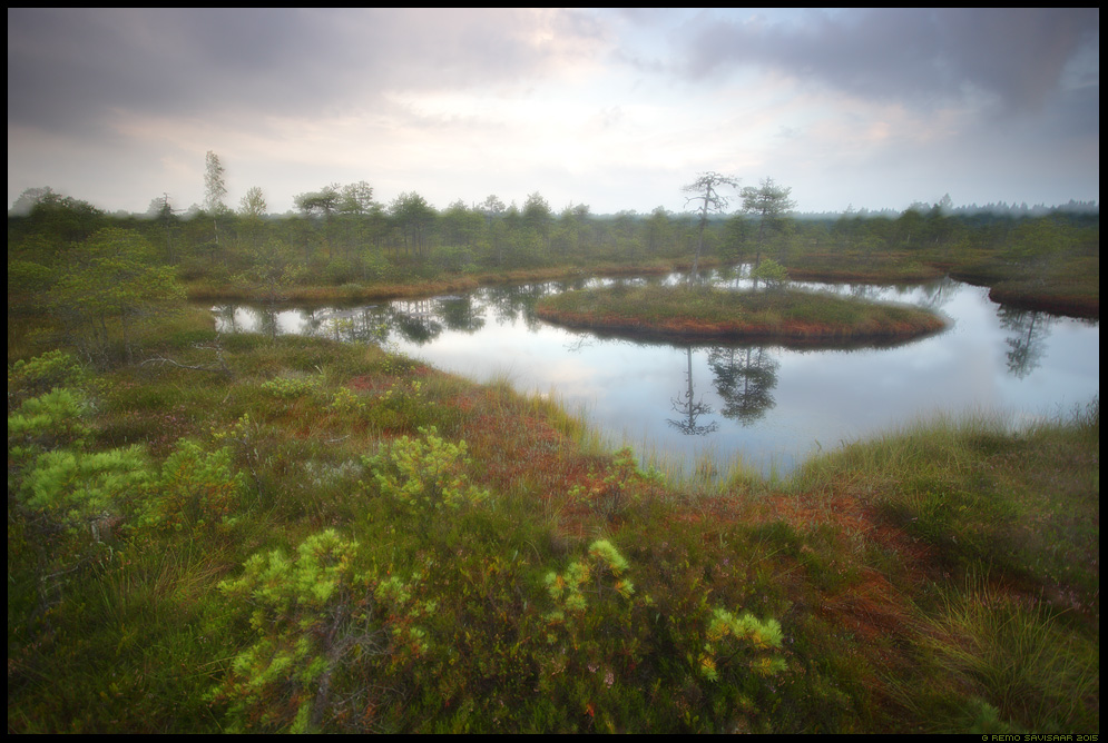 Nõiduslik raba, Bewitching bog endla männikjärve rabasaar september Remo Savisaar Eesti loodus  Estonian Estonia Baltic nature wildlife photography photo blog loodusfotod loodusfoto looduspilt looduspildid