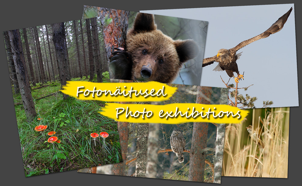 fotonäitus, photo exhibition