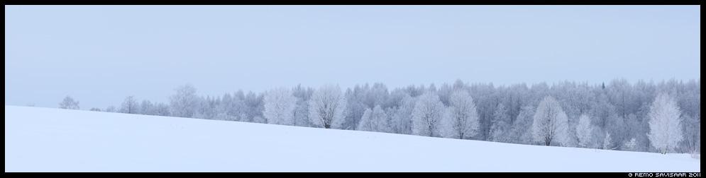 Härmatis, härmas, talv, maastik, winter, frost, lumi, lumine