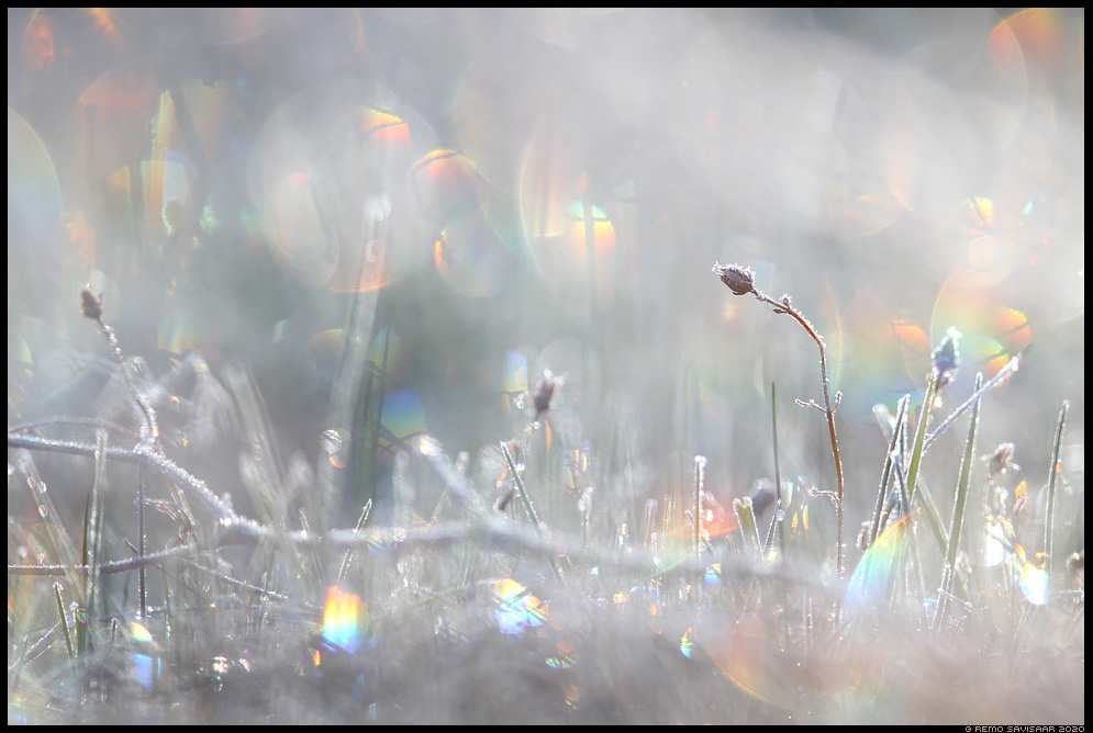 jäälilled frost frosty hoarfrost Remo Savisaar Eesti loodus  Estonian Estonia Baltic nature wildlife photography photo blog loodusfotod loodusfoto looduspilt looduspildid