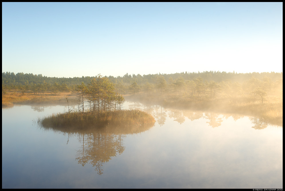 Hommik rabas, Morning at the bog marsh Estonia, Europe Remo Savisaar Eesti loodus  Estonian Estonia Baltic nature wildlife photography photo blog loodusfotod loodusfoto looduspilt looduspildid