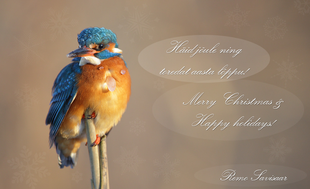 Pühadetervitused! Season's Greetings! jõulud xmas Remo Savisaar Eesti loodus  Estonian Estonia Baltic nature wildlife photography photo blog loodusfotod loodusfoto looduspilt looduspildid