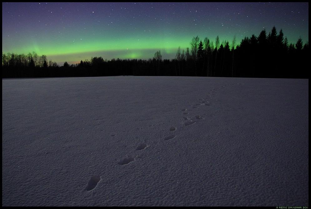 Imede öö, The Night of Miracles, Virmalised, The Northern Lights, tähistaevas, pime, tähed, meeleolu, värvidemäng, Aurora Borealis, jäljed lumel, tracks on the snow, lumine, talv, talvine, winter