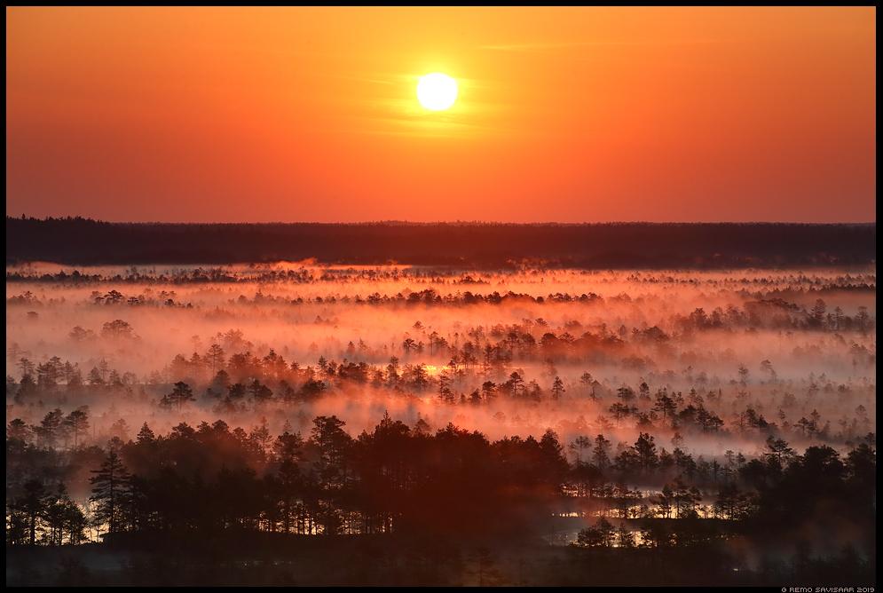 Põhja-Kõrvemaa looduskaitseala Kõnnu-Suursoo bog  raba swamp fog mist misty udune Remo Savisaar Eesti loodus Estonian Estonia Baltic nature wildlife photography photo blog loodusfotod loodusfoto looduspilt looduspildid