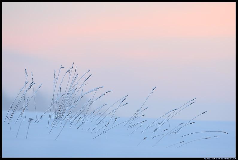 talvine udu, taliudu, winter, talv, lumi, udu, udune, fog, foggy, kõrred