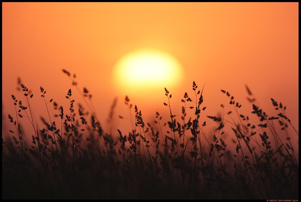 Õhtu heinamaa veerel, Evening at the edge of meadow Remo Savisaar Eesti loodus  Estonian Estonia Baltic nature wildlife photography photo blog loodusfotod loodusfoto looduspilt looduspildid