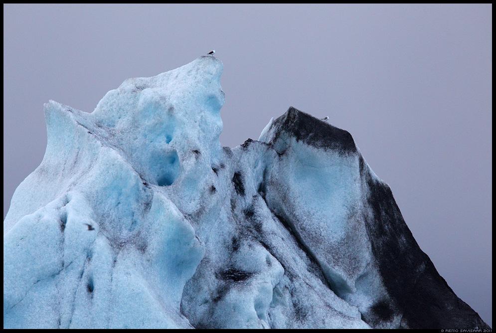 Island, Iceland, Jökulsárlón, liusikujää, jäätükid, jäämägi, Kajakad, Gulls