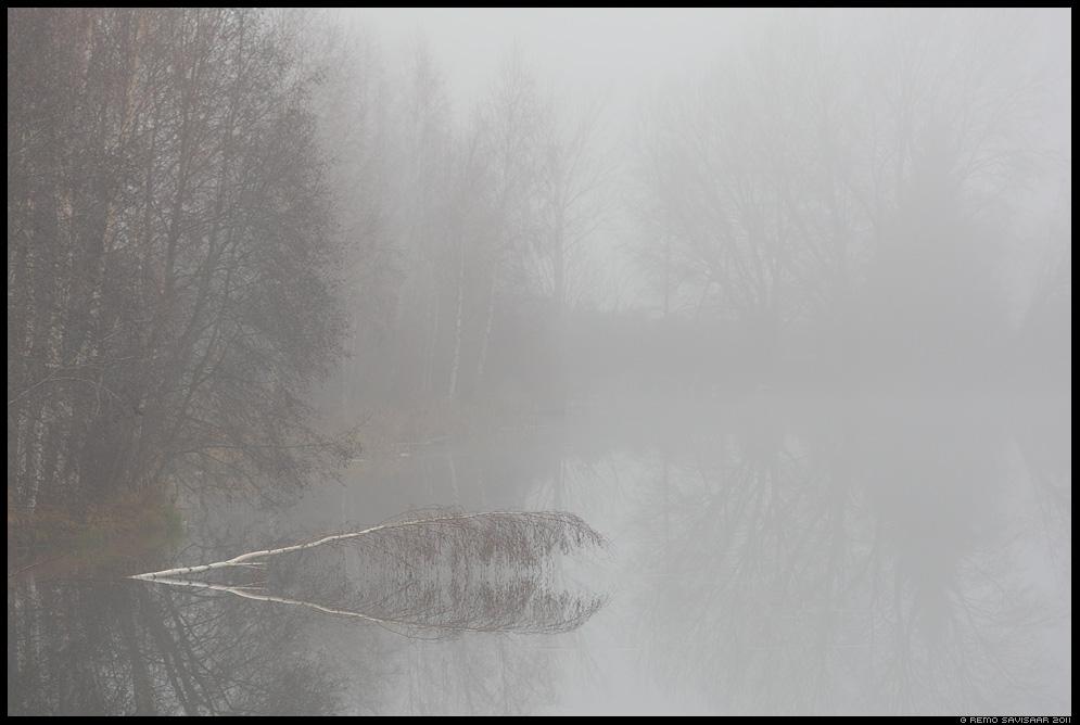Udune november, Foggy november, järv, järvel, vesi, sügis, autumn, fall, udu, udune, pehme, foggy, misty, fog, mist