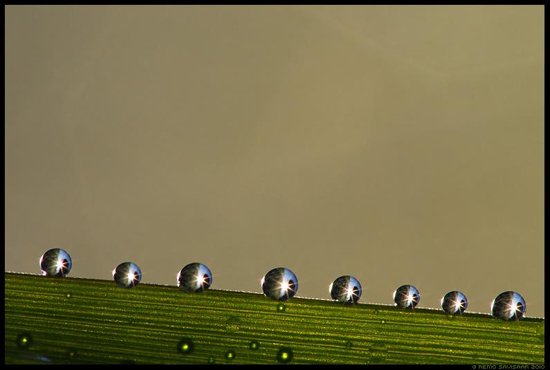 Pärl, Pärlid, Kaste, Kastepiisad, Pearls, Morning dew