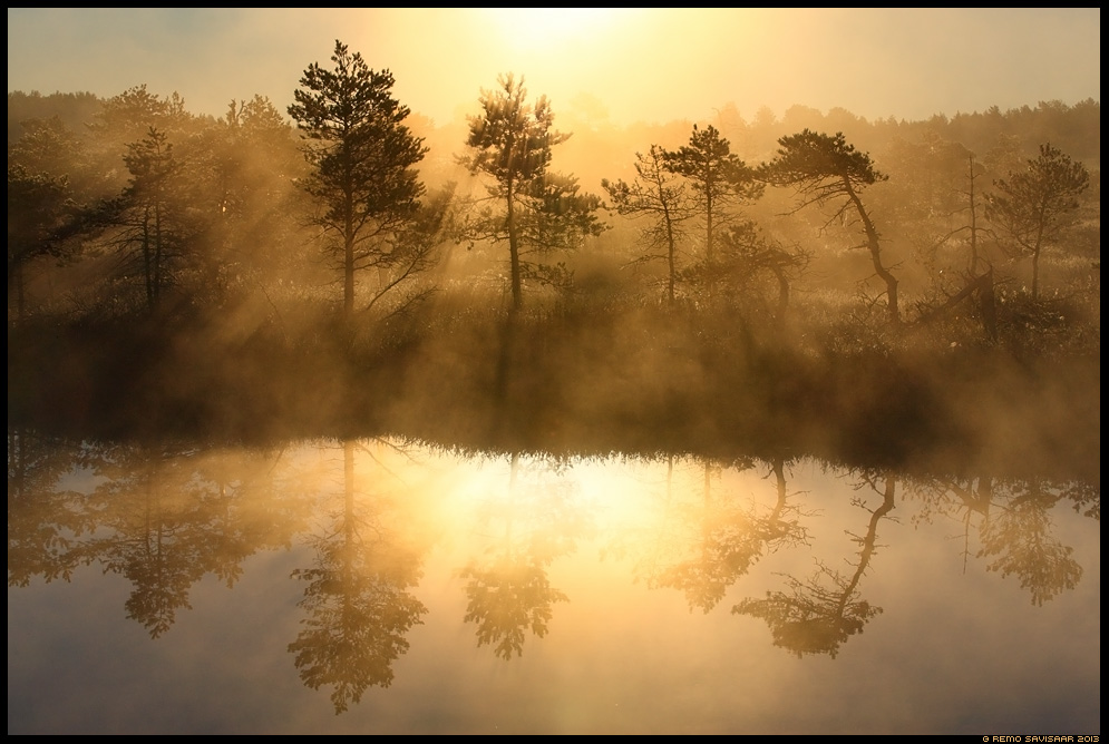 Kullatud raba, Golden bog Estonia, Europe Remo Savisaar Eesti loodus  Estonian Estonia Baltic nature wildlife photography photo blog loodusfotod loodusfoto looduspilt looduspildid