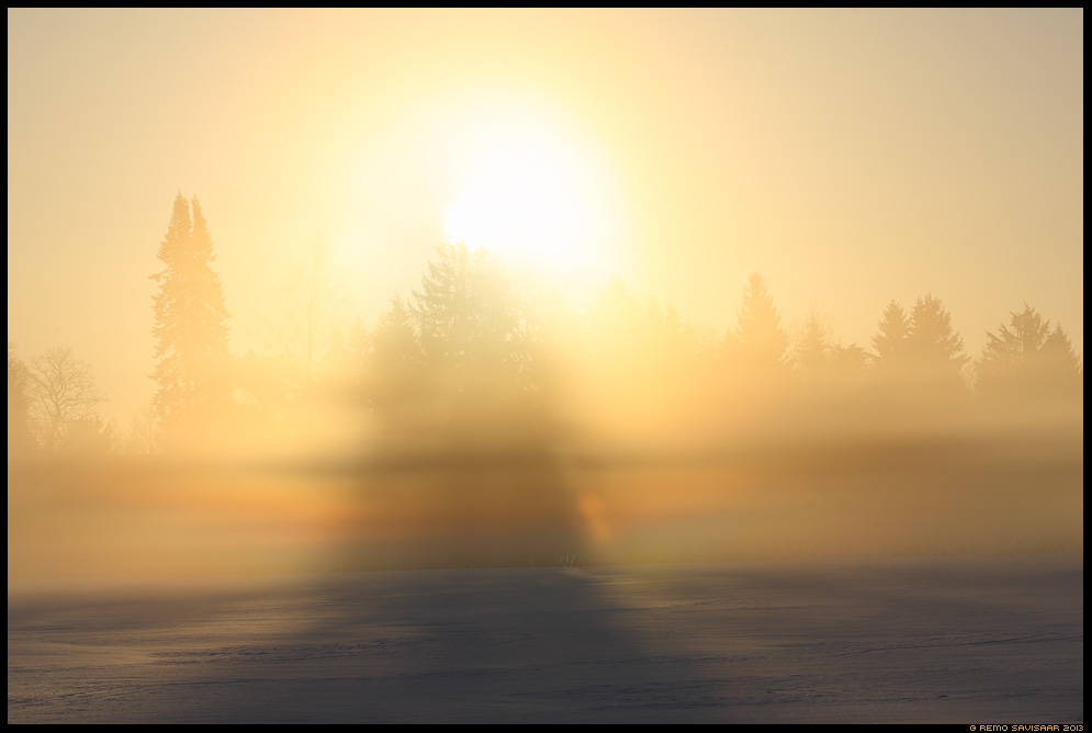 Kuldne tõus, Golden sunrise Kuldne hommik, Golden morning udu fog udune mist misty aprill april Remo Savisaar Eesti loodus Estonian Estonia Baltic nature wildlife photography photo blog loodusfotod loodusfoto looduspilt looduspildid