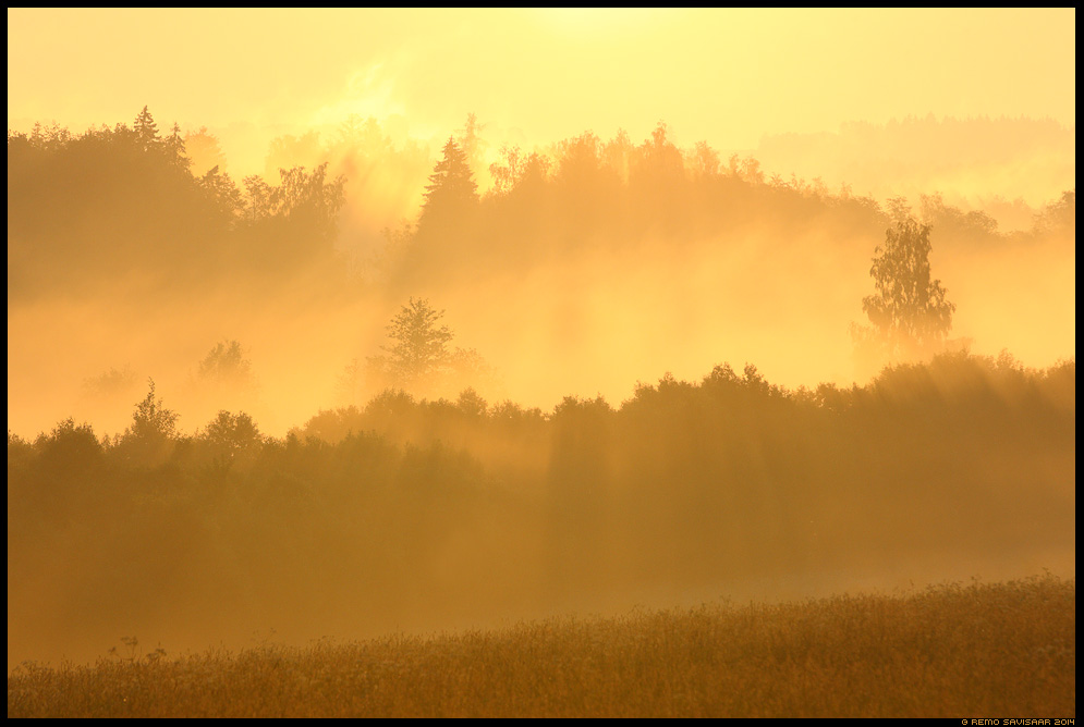 päikesetõus sunrise fog foggy mist misty golden vooremaa Remo Savisaar Eesti loodus Estonian Estonia Baltic nature wildlife photography photo blog loodusfotod loodusfoto looduspilt vooremaa looduspildid landscape nature wild wildlife nordic