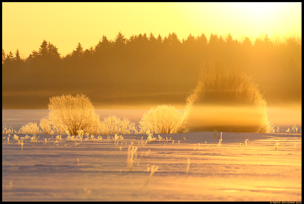 Kuldne hommik, Golden morning udu fog udune mist misty aprill april Remo Savisaar Eesti loodus Estonian Estonia Baltic nature wildlife photography photo blog loodusfotod loodusfoto looduspilt looduspildid
