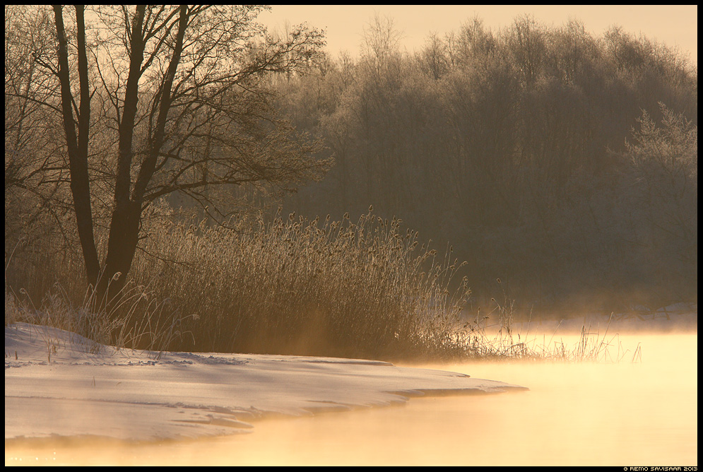 Talve võlu, Magic of winter, Emajõgi, Mother River, Emajõgi river, Emajõe-Suursoo Nature Reserve, talv, winter, spring, kevad, lumi, roostik, jõekäär, vaikus, silence, Remo Savisaar Eesti loodus Estonian Estonia Baltic nature wildlife photography photo blog loodusfotod loodusfoto looduspilt looduspildid