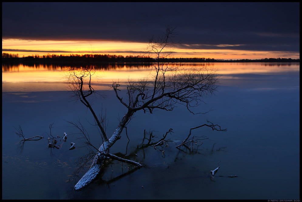 Jalgupidi vees, Feet in the Water, talv, winter, järv, lake, langenud puu, päikeseloojang, hämar, külm, jaanuar, january
