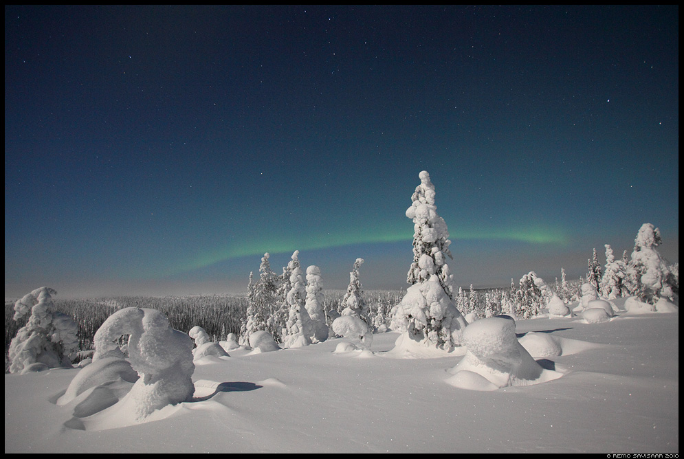 Lapimaa, Lapland Remo Savisaar soome finland talv lumi winter snow virmalised aurora borealis northern lights nature wildlife photography photo blog loodusfotod loodusfoto looduspilt looduspildid