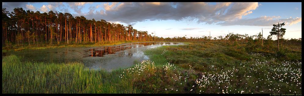 Rabajärv, Bog lake