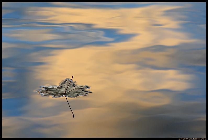 Vahtraleht, Mapple leaf, sügis, vesi, autumn, water, järv