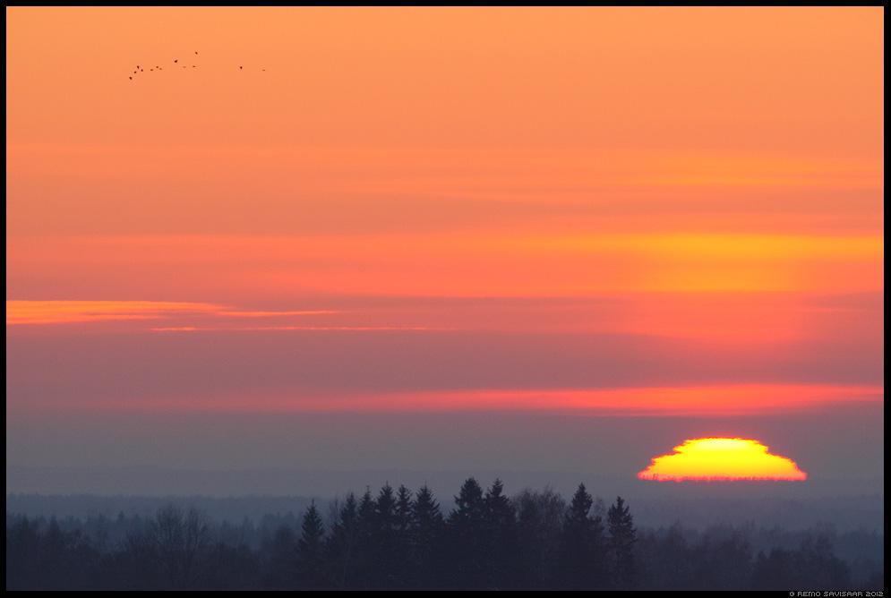 Viimased minutid, Last minutes, sunset, päikeseloojang, Hakk, Jackdaw, Corvus monedula