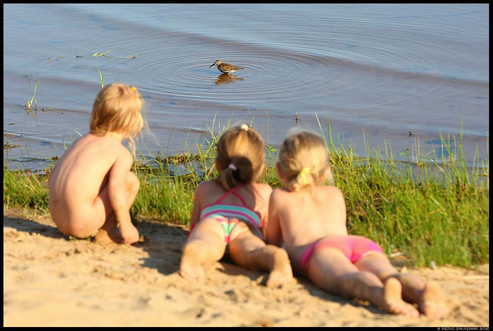 Risla, Dunlin, Calidris alpina Remo Savisaar Eesti loodus  Estonian Estonia Baltic nature wildlife photography photo blog loodusfotod loodusfoto looduspilt looduspildid