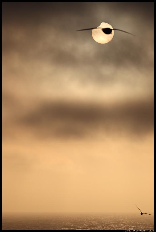 Osaline päikesevarjutus, a partial solar eclipse, Island, Iceland, 1 june 2011, june