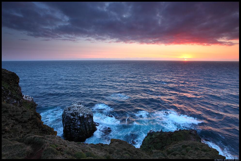 Island, Iceland, Suulade koloonia, Gannet colony, Suula, Northern Gannet, Morus bassanus, keskööpäike, midnight sun