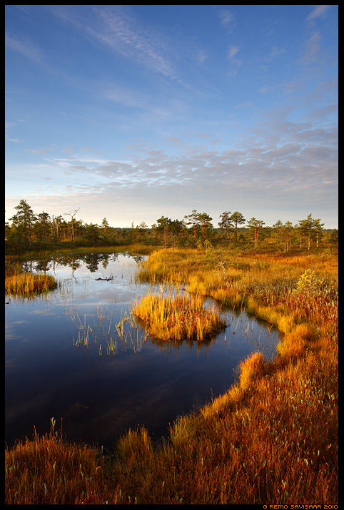 Lauka veerel, Edge of bog pool, laugas, sügis, Männikjärve raba, Endla looduskaitseala, Männikjärve Bog, Endla Nature Reserve