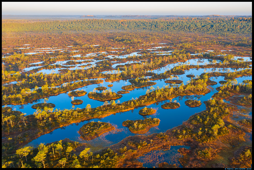 Laukad hommikupäikeses, Early morning light at bog pools endla männikjärve Remo Savisaar Eesti loodus  Estonian Estonia Baltic nature wildlife photography photo blog loodusfotod loodusfoto looduspilt looduspildid