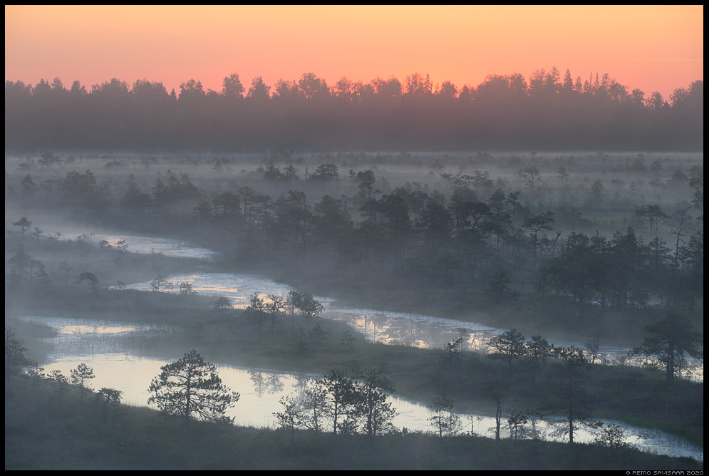 bog varahommik raba jõgevamaa endla männikjärve bog swamp fog mist misty udune Remo Savisaar Eesti loodus Estonian Estonia Baltic nature wildlife photography photo blog loodusfotod loodusfoto looduspilt looduspildid