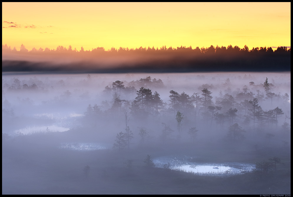 bog suveöö raba jõgevamaa endla männikjärve bog swamp fog mist misty udune Remo Savisaar Eesti loodus Estonian Estonia Baltic nature wildlife photography photo blog loodusfotod loodusfoto looduspilt looduspildid