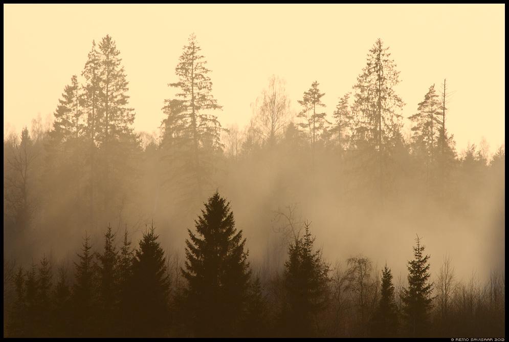 Noored ja vanad, Young and old, Metsameeleolu, Forest mood, märts, meeleolu, moody, mood, forest, trees, kuldne, golden