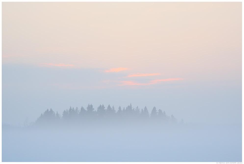 Väike metsatukk, Island of Trees, talv, lumi, lumine, udu, taliudu, winter, fog, foggy