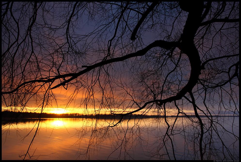 Sirutades valguse poole, Reaching for the Light, järv, lake, paju, willow, pajupuu, oksad, branches