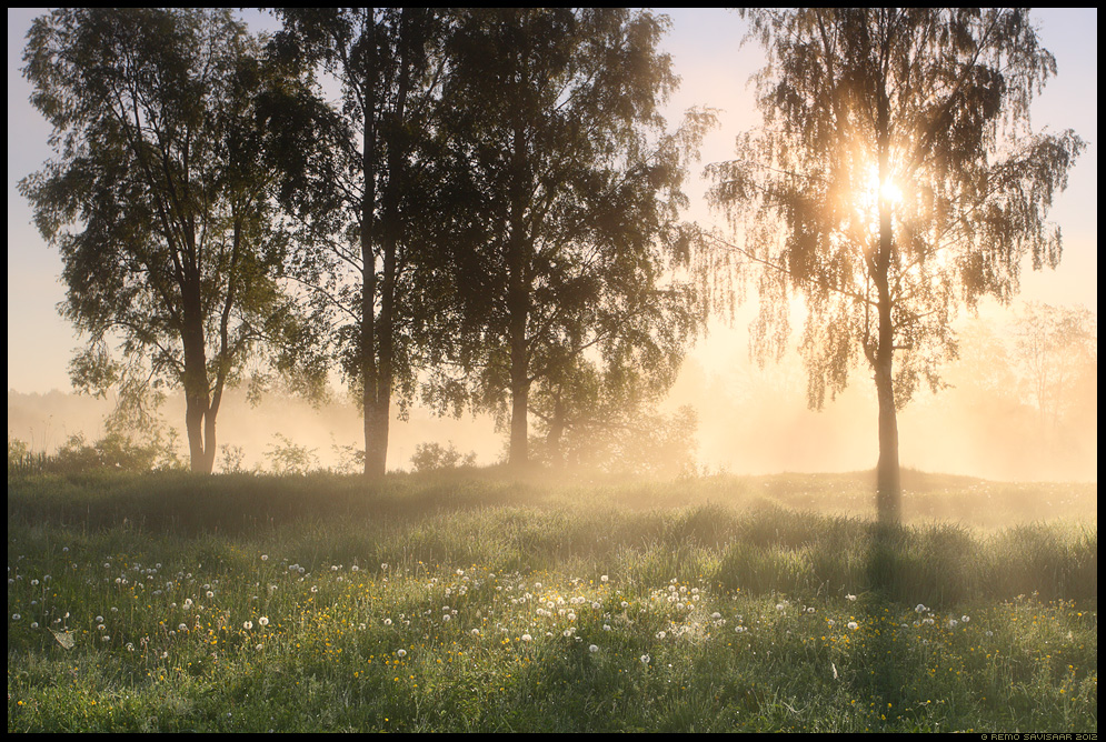 Päeva algus, Beginning of the Day, Suvehõng, Scent of Summer, päikesetõus sunrise hommik morning luht luhal floodplain Eesti, nature, loodus, udu, udune, fog, foggy
