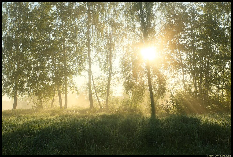 Päeva algus, Beginning of the Day, Eesti, nature, loodus, udu, udune, fog, foggy, luht, luhal, floodplain, päike, päikesetõus, sunrise