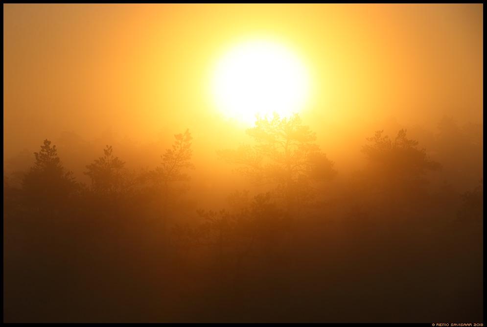 Päikesetõus rabas, Sunrise in the bog raba jõgevamaa endla männikjärve bog swamp fog mist misty udune Remo Savisaar Eesti loodus Estonian Estonia Baltic nature wildlife photography photo blog loodusfotod loodusfoto looduspilt looduspildid
